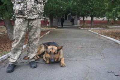 Ищут сигареты, задерживают контрабандистов: как собаки помогают пограничникам Буковины
