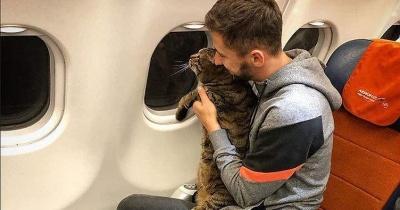 Кота не хотіли пускати в салон літака через зайву вагу