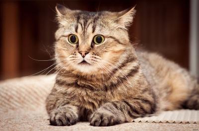 Кіт прийняв ванну і став зіркою інтернету - відео