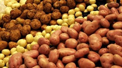 У селищі на Буковині через 50 років скасували карантин через рак картоплі