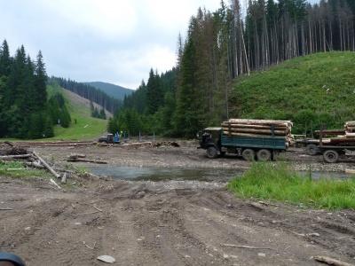 Екологи: Рада спростила вирубку Карпат завдяки правкам до закону