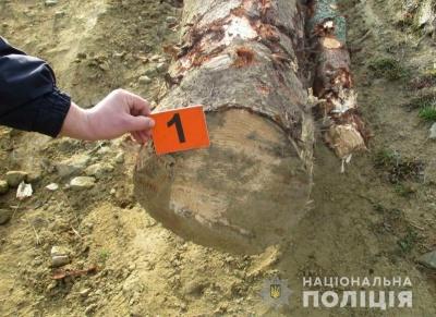 На Буковині затримали молодика за крадіжку лісу