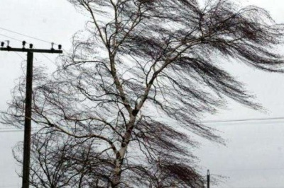 На Буковині протягом двох днів очікується сильний вітер