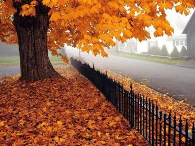 Синоптики обіцяють потепління наприкінці листопада