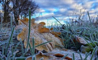 Синоптики розповіли, чи очікувати снігу на Буковині