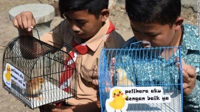 В Індонезії дітям видали курчат, аби вони менше сиділи у смартфонах