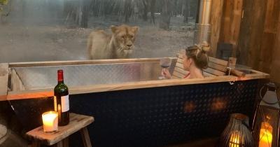В Англії пропонують пожити у готелі серед диких тварин