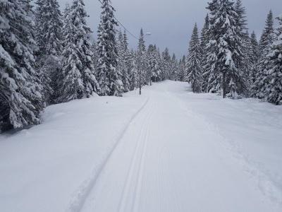 На Буковині на зимовий період заборонили рух авто на перевалах Німчич і Шурдин