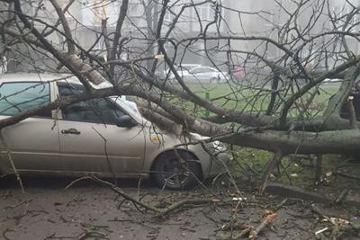 У Чернівцях дерево впало на легковик і розбило лобове скло