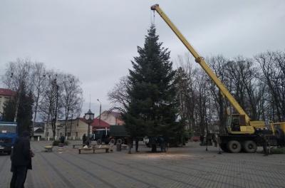 У центрі Сторожинця встановили 15-метрову новорічну ялинку
