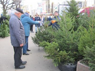 Сьогодні в Чернівцях стартує продаж новорічних ялинок