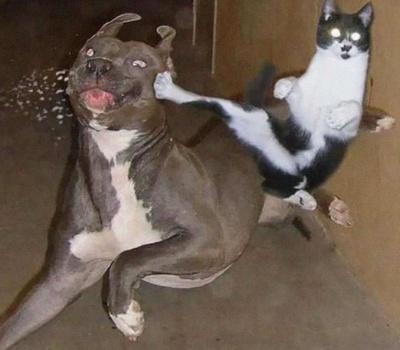 Як котам і собакам живеться разом: показали смішні фото