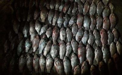 На Дністрі затримали браконьєра, який виловив сітками більше 30 кг риби