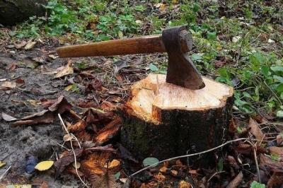 На Буковині невідомі зрубали 40 дерев на території лісгоспу