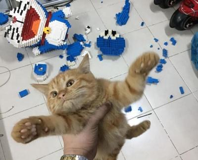 Нахабний кіт зруйнував фігуру з конструктора, яку його господар складав тиждень - фото