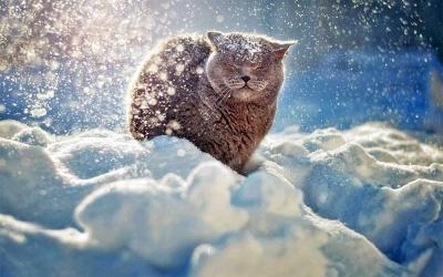 «Снігу буде менше»: якою буде погода до кінця зими на Буковині