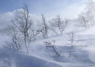 Штормове попередження: на Буковині синоптики попереджають про сильний вітер