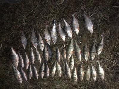 За місяць на Буковині рибоохоронний патруль виявив 67 порушень