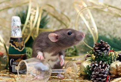 Чому люди бояться пацюків: як завинив символ Нового року, психологи розкрили правду про страхи