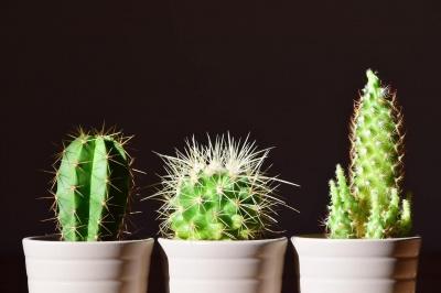 Японські вчені довели, що рослини на робочому столі допомагають зменшити стрес