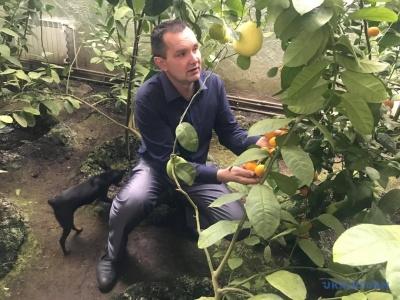 Взимку ростуть ананаси і папая: садівник з Буковини створив власний тропічний сад