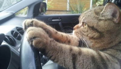 Кіт залишився у замкненому авто і включив аварійну сигналізацію, щоб покликати на допомогу