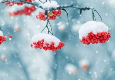 Синоптики розповіли, коли на Буковині знову будуть морози