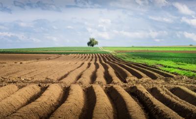 Скільки в середньому коштуватиме гектар землі