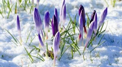 У березні - морози, у травні - літня спека: народний синоптик прогнозує аномальну погоду навесні