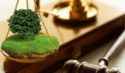Прокуратура вимагає повернути 46 га землі на Буковині в державну власність