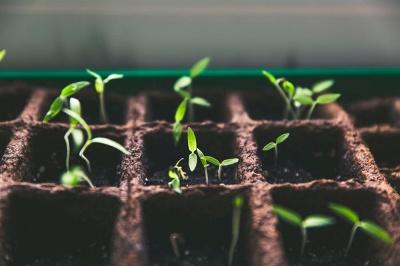 Посівний календар на 2020 рік: коли найкраще садити овочі та фрукти