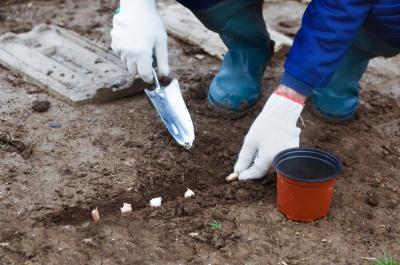 Посівний календар на травень 2020: коли можна садити огірки, помідори та інші рослини