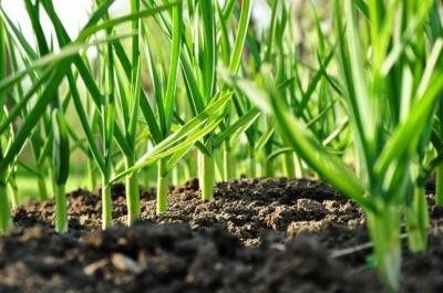 Посівний календар на квітень 2020: коли можна садити картоплю та овочі