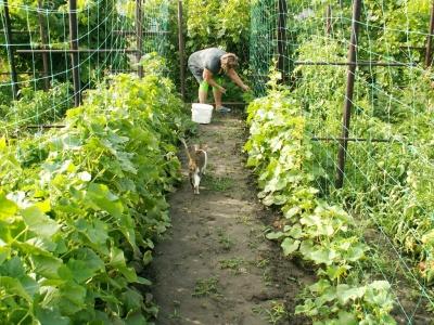 Посівний календар на червень 2020: коли можна садити помідори, капусту та інші овочі
