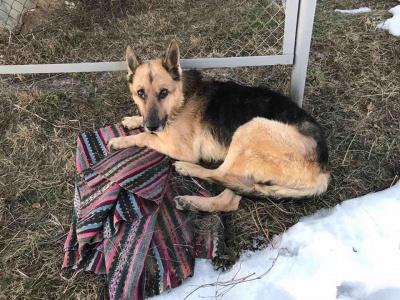 У Чернівцях волонтери врятувати сліпого собаку від смерті - фото
