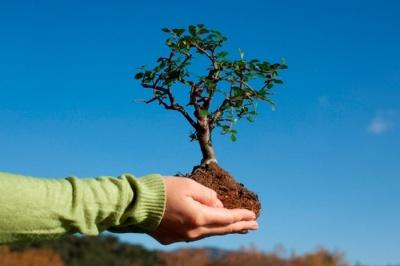 Активісти планують масштабну акцію з висадки понад мільйона дерев по всій Україні
