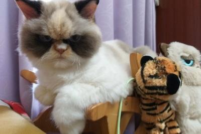 Кумедні фото кішки з сердитим виразом обличчя підкорили соцмережі