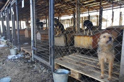 «Підбираємо хорошого друга»: у Чернівцях шукають господарів для собак із Центру стерилізації - фото