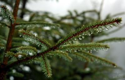 Літо й осінь - з дощами: народний синоптик дав прогноз погоди на весь 2020 рік
