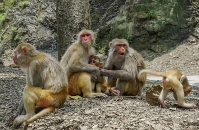Люди в костюмах ведмедів врятували індійське село від нападу мавп