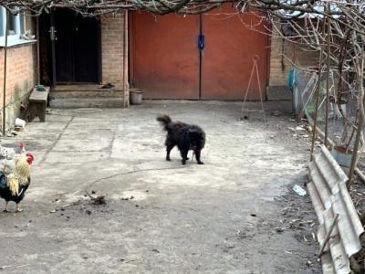 Журналісти знайшли собаку, якого «слуга народу» радив продати, щоб сплатити за комуналку