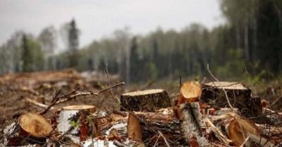 У дендропарку на Буковині невідомі зрубали майже 130 дерев