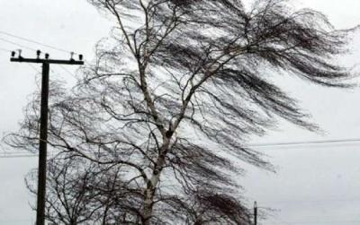 Штормове попередження: на Буковині очікується сильний вітер