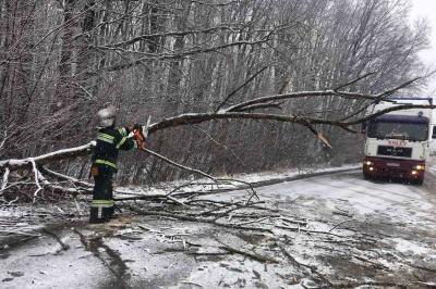 Повалені дерева і застряглі в заметах авто: як на Буковині боролися з наслідками негоди - фото