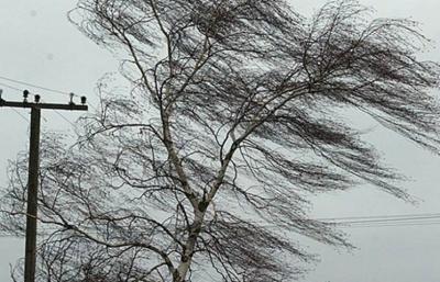 Штормове попередження: на Буковині очікується сильний вітер та ожеледиця