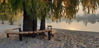 У Києві дерево, біля якого знімався Віктор Цой, отримало охоронний статус