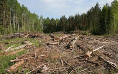 Як на Буковині вирубують ліси: торік поліція затримала 80 автівок