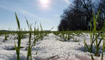 Синоптики розповіли, яким буде кінець зими на Буковині
