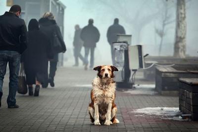 На Буковині підрахують безпритульних собак