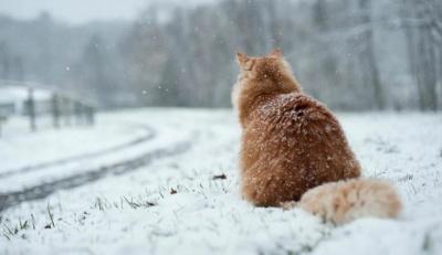 Навесні Україну може завалити снігом — прогноз синоптика